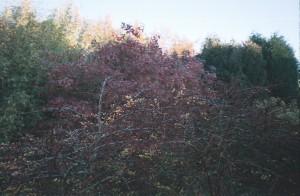 Shrubs in Autumn