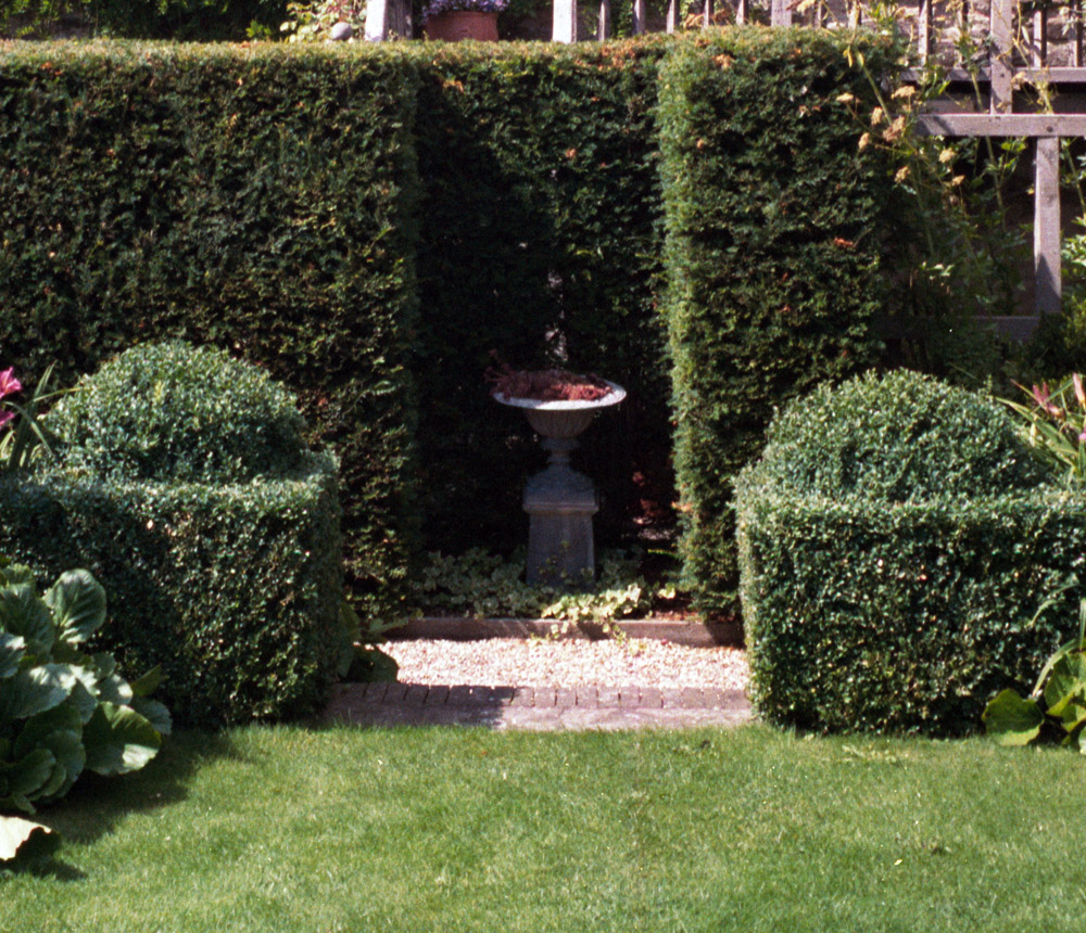 Architectural Plants Mark Mcnee