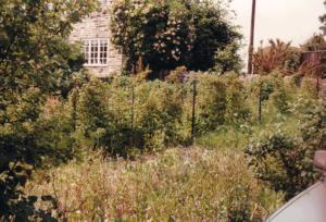 Over grown garden near Scotch Corner