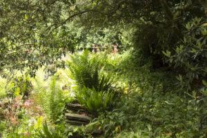 St. Nicholas - The Rock Garden.